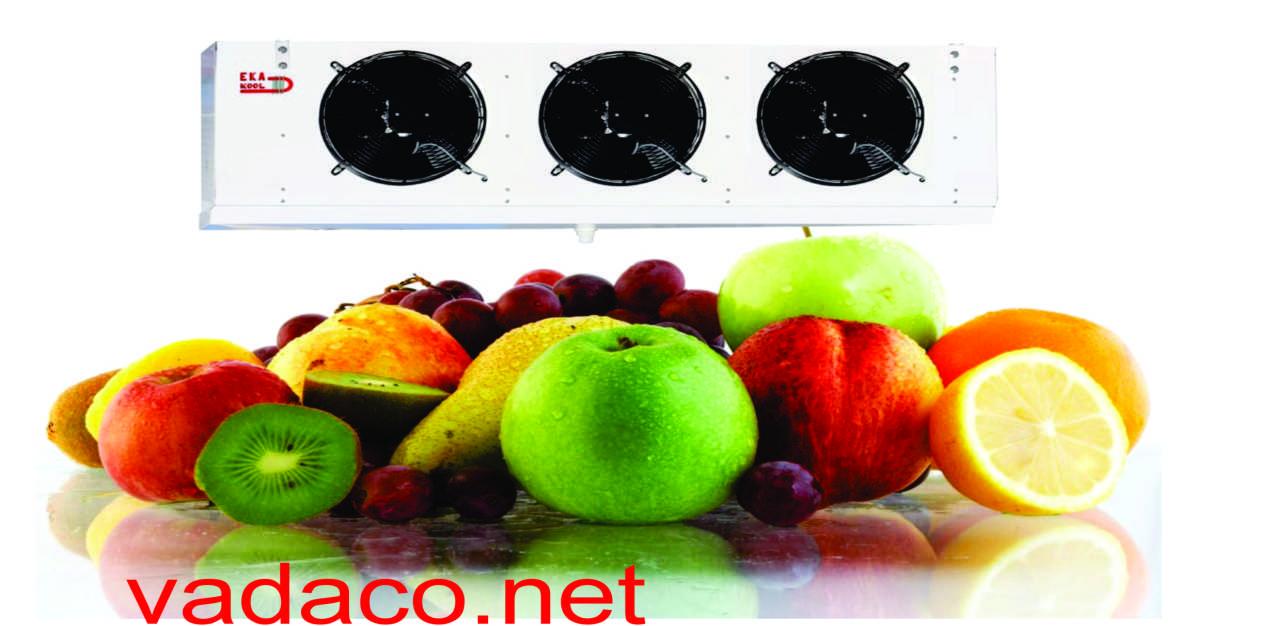 Kho lạnh chứa rau củ quả